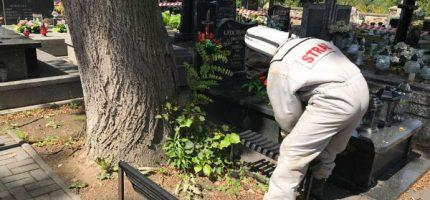 Gniazdo szerszeni na cmentarzu parafialnym. Strażacy w akcji