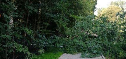 Drzewo, które uszkodziło sieć WKD, było spróchniałe. Czemu go nie wycięto?