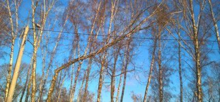 Złamane drzewo zagrażało bezpieczeństwu. Strażacy zainterweniowali