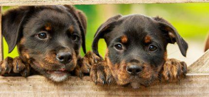 Kolejne szczepienia psów na podgrodziskich wsiach