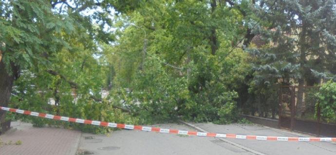 Drzewo przewróciło się na drogę