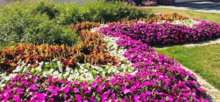 Konkurs Terra Flower Power: Grodzisk walczy o podium
