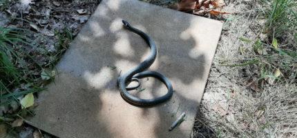 Wąż odwiedził Wiatraczną