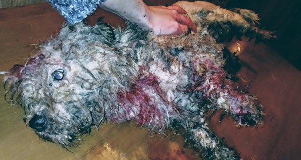 """Pies wyrzucony na stawach w Musułach. """"Był związany i zakrwawiony"""""""
