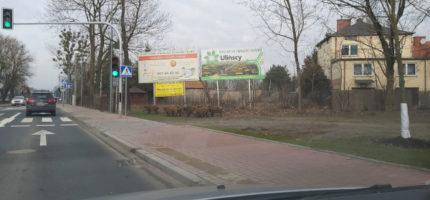 Dziki spacerowały po Nadarzyńskiej [FOTO, WIDEO]