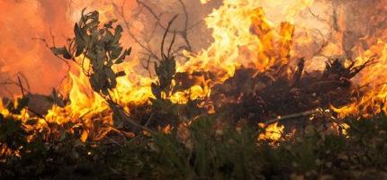Pożar w Zarębach. Na miejscu sześć zastępów