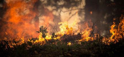 Pożary lasu i traw w gminie Jaktorów