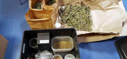 Policja nakryła hodowlę marihuany pod Brwinowem. Kilkaset sadzonek, kilogramy narkotyków [FOTO]