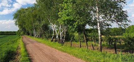 Ponad 300 tys. zł dotacji na wiejskie drogi