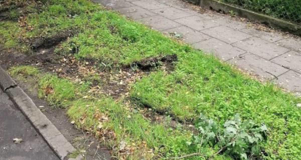 Zniszczona milanowska zieleń. Urzędnicy apelują