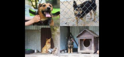 Psy z Radys trafiły do schroniska w Milanówku. Możemy im pomóc