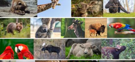 Włącz się w zbiórkę zwierzęcych przysmaków. Trafią do warszawskiego ZOO
