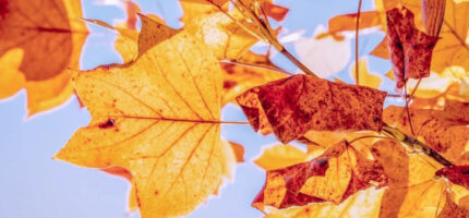 Żegnamy lato, witamy jesień. Dziś równonoc jesienna